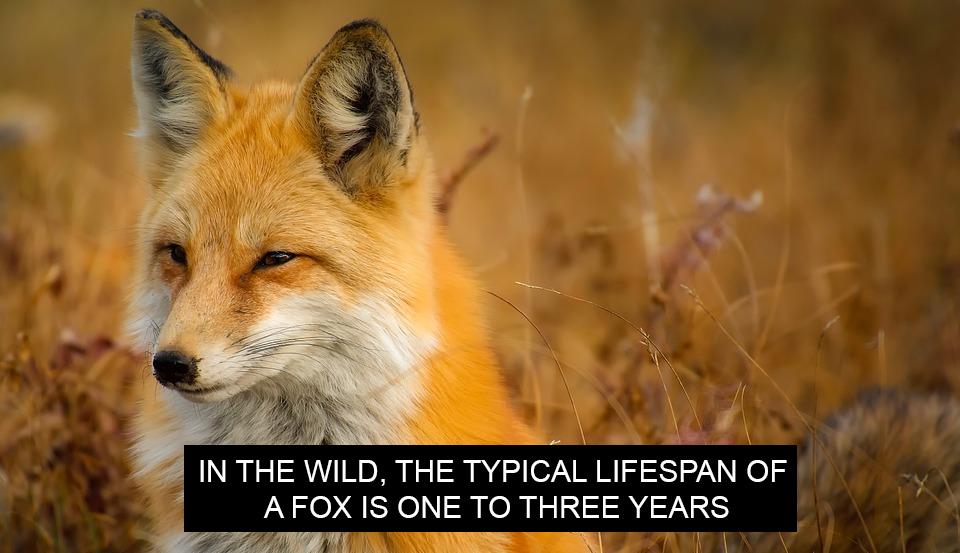 Closed captions example fox image